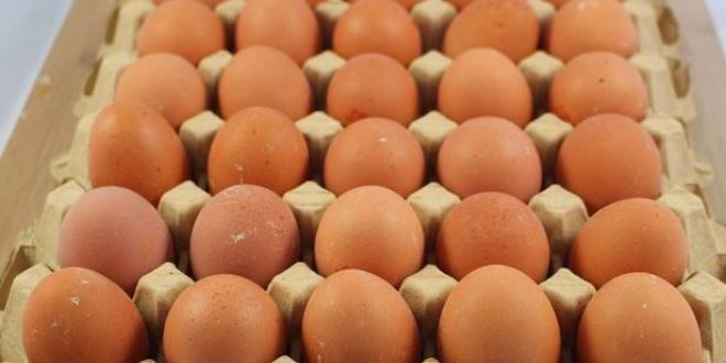 Production d'œufs au Maroc: ce que vous ne savez (peut-être) pas