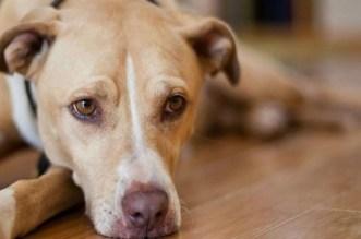 Dar Bouazza: le massacre de chiens provoque la colère de la Toile (PHOTO)