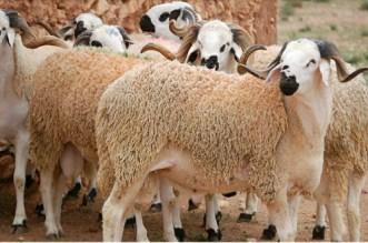 Aid Al Adha 2019: le ministère de l'Agriculture fait le bilan