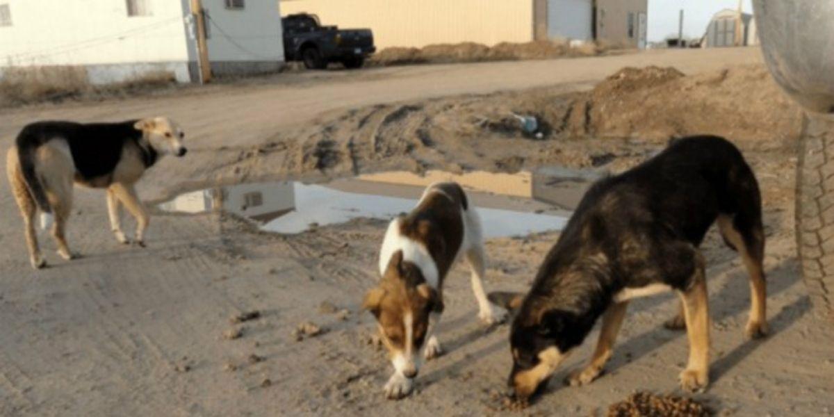 Béni Mellal: un homme tué par un chien errant