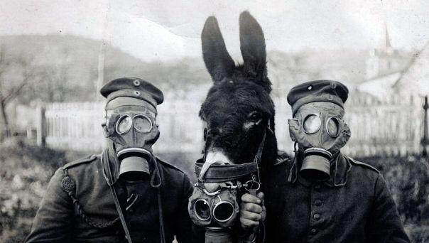 Deux soldats et un âne portent des masques à gaz