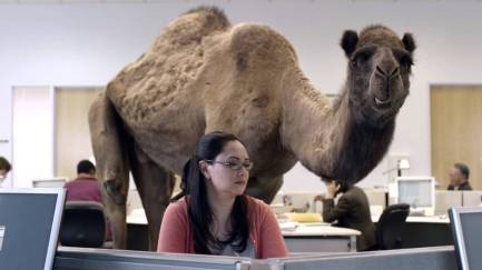hump day hires photo