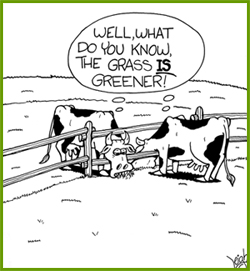 Image result for sometimes the grass is greener on the other side because it is dead