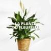 Plante du fleuriste - lesmeilleursfleuristes -livraison de fleurs et livraison de plantes - plante verte, plante fleurie