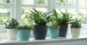 Read more about the article Prendre soins de vos plantes pendant les vacances.