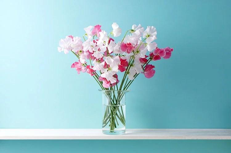 You are currently viewing Fleurs d'été