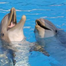 dauphins antibes
