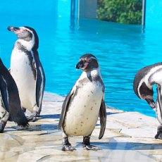pingouin marineland