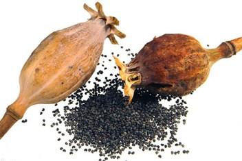 Risultati immagini per olio di papavero