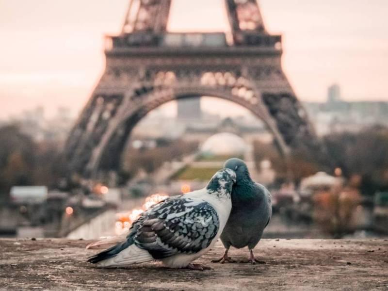 Retour à Paris : des pigeons partout
