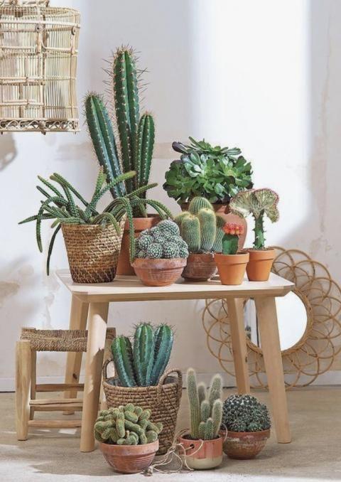 Comment arroser un cactus ?