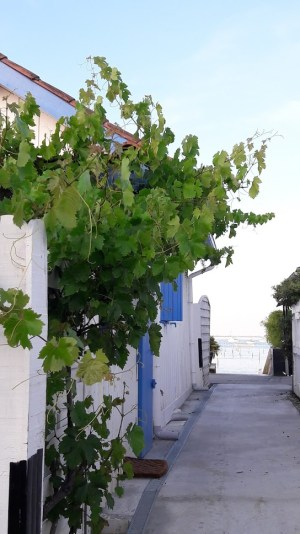 L'Herbe, village pittoresque du Cap Ferret