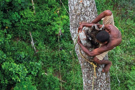 RÉPUBLIQUE DU CONGO – Province de la Likouala