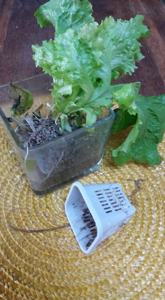 salad-in-jar-roots