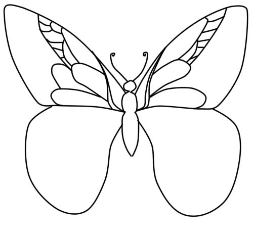 how to draw butterfly phased pencil step