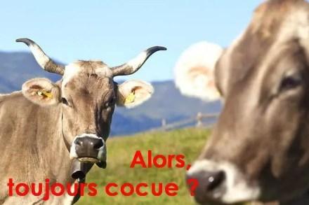 Suisse un vote bien vache ruminée par les Elites