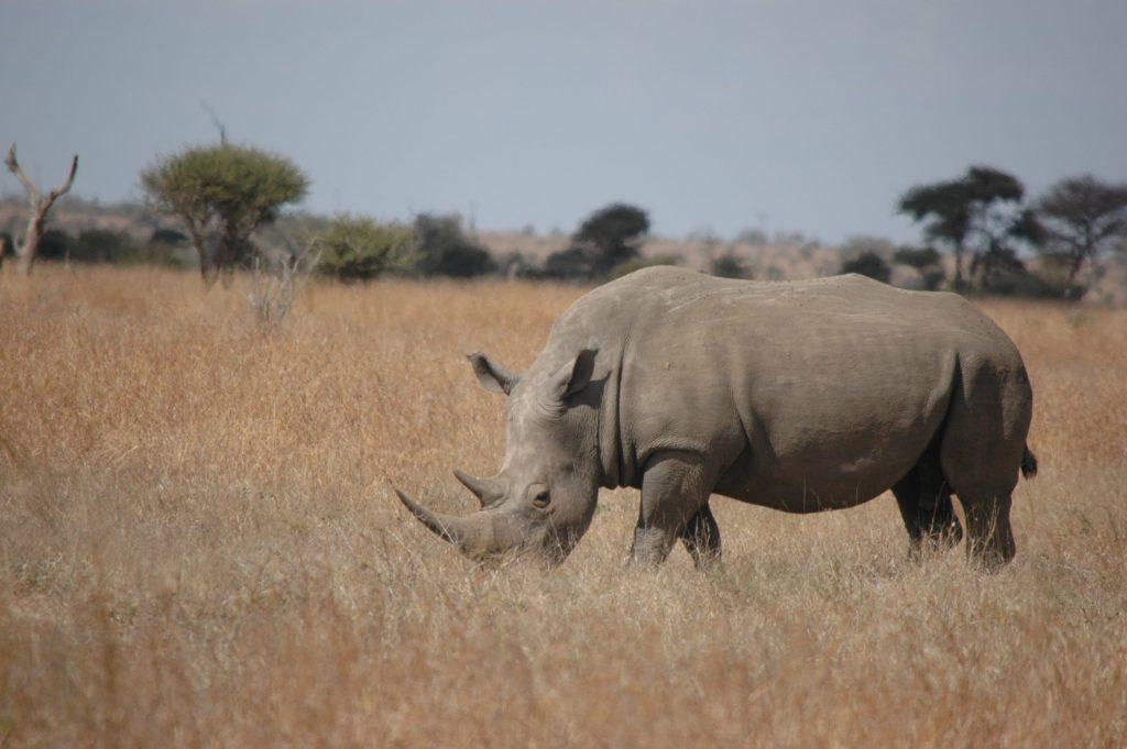 Afrique du Sud 23