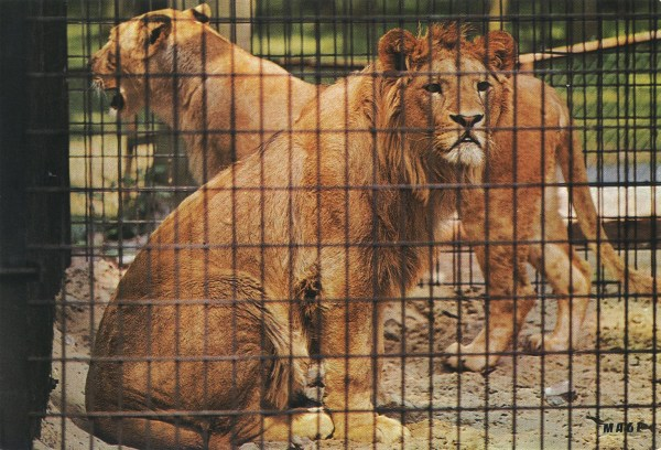 Les Zoos Dans Le Monde - Parc De La Chanterelle