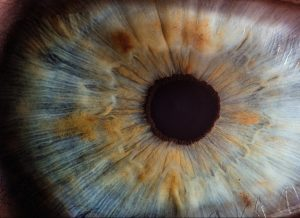 oog, pupil