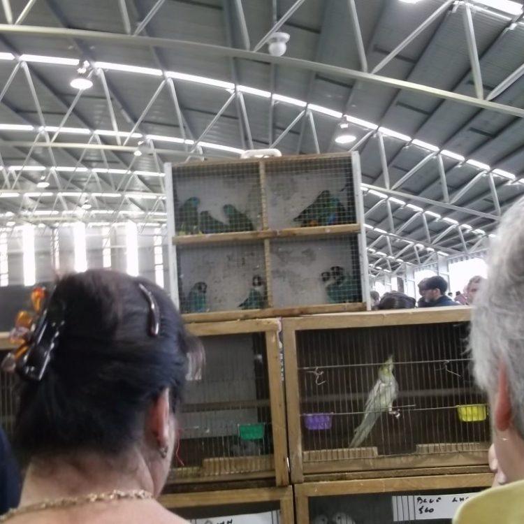 alt crammed scared parrots