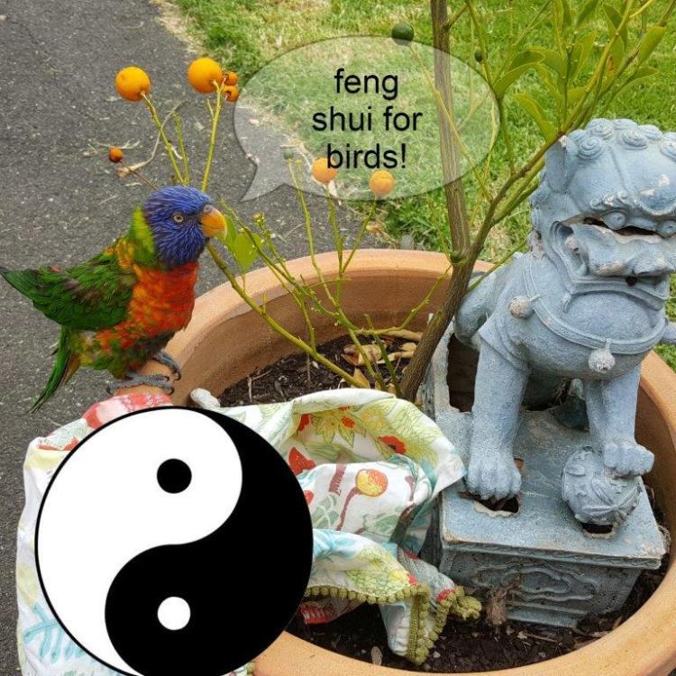 Feng Shui for Birds!