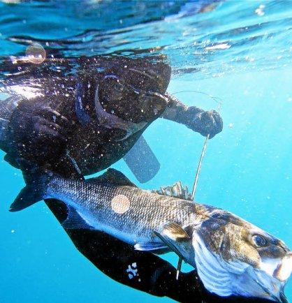 Geoffrey Geyer dans ses oeuvres. Pas de « no kill » possible sous l'eau ! Les...