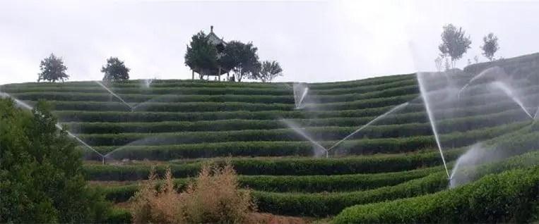 Jardin de thé écologique de Chine