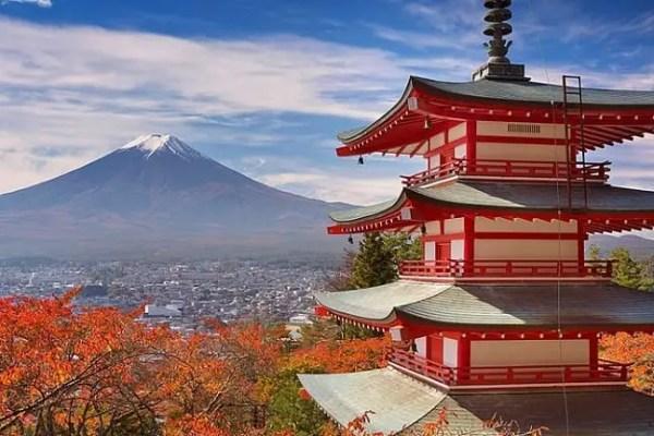 Thé du Japon 4