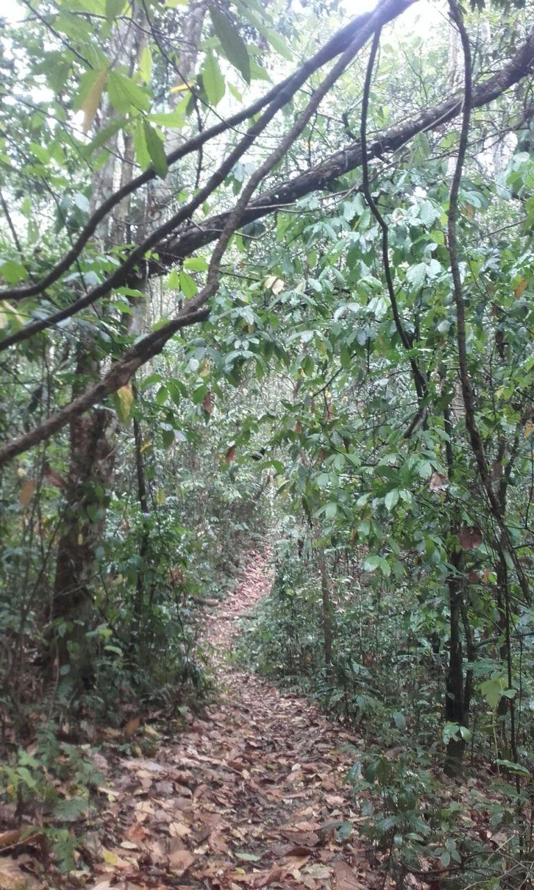 Deštný prales Mabira