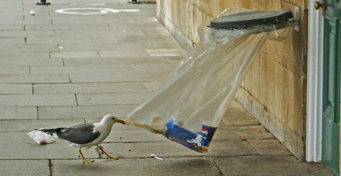gabbiano con rifiuti