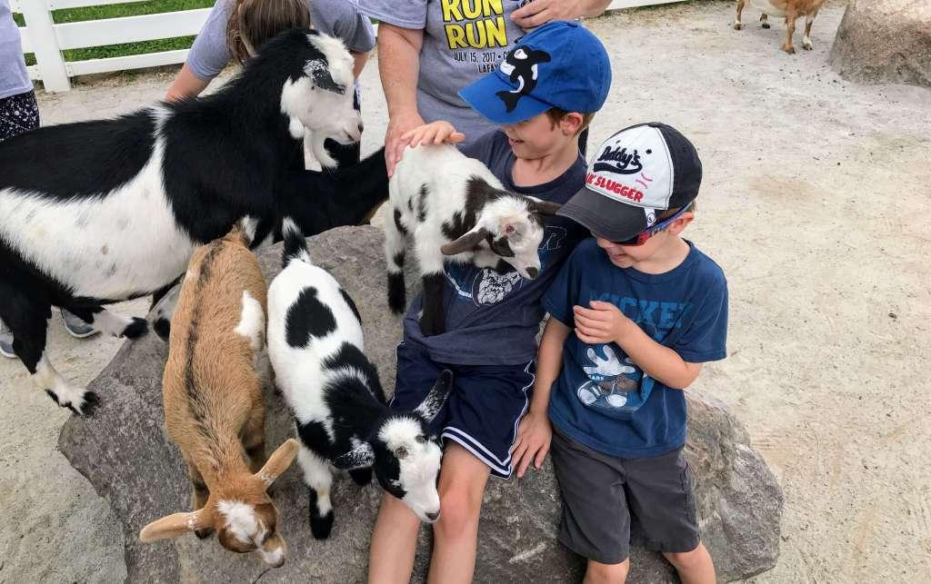 Petting Zoo inside Columbian Park Zoo - Lafayette, Indiana