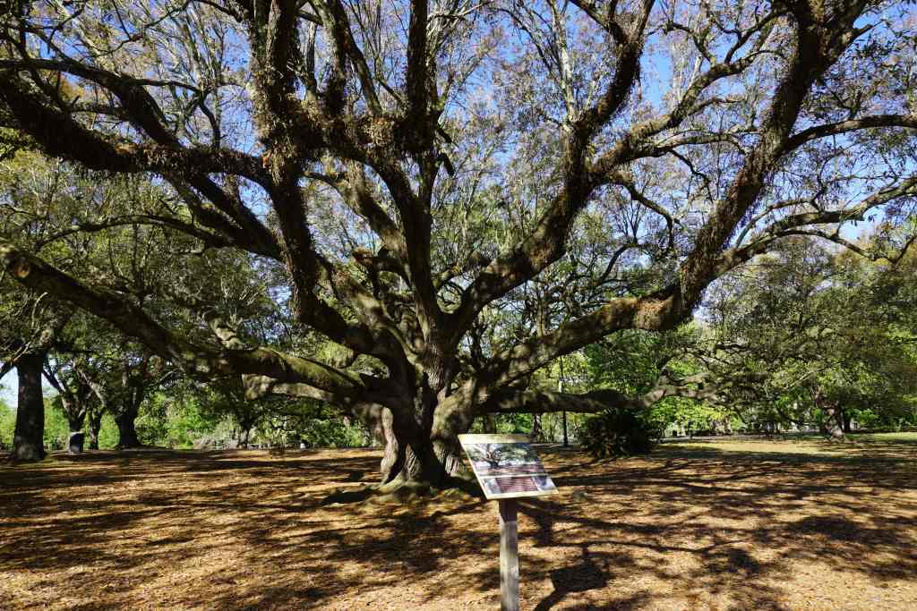New Orleans Attractions for Kids - Audubon Park live oaks