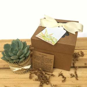 Unique Teacher Appreciation Gifts - succulent box