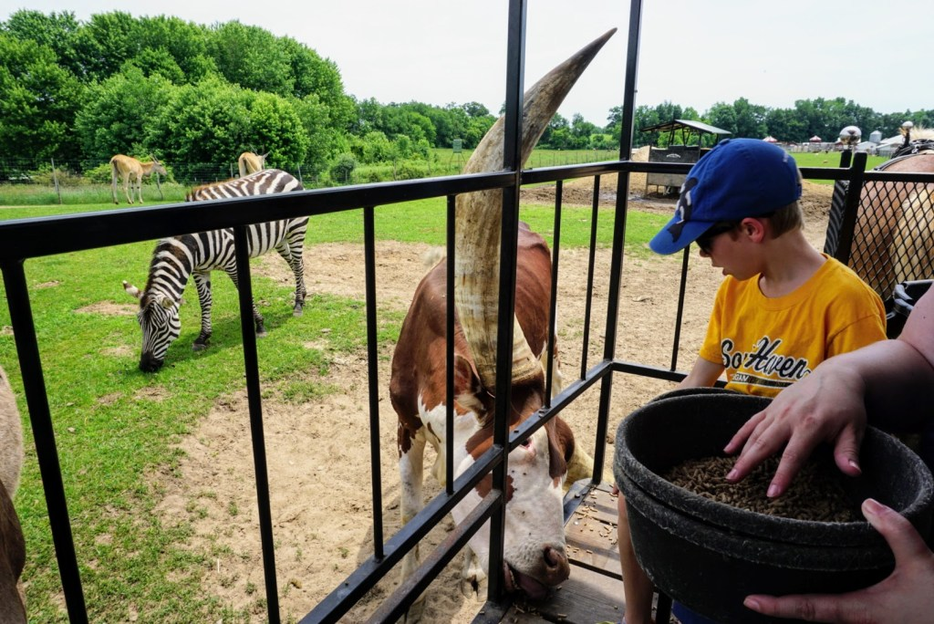 Shipshewana with Kids - Dutch Creek Farm Animal Park