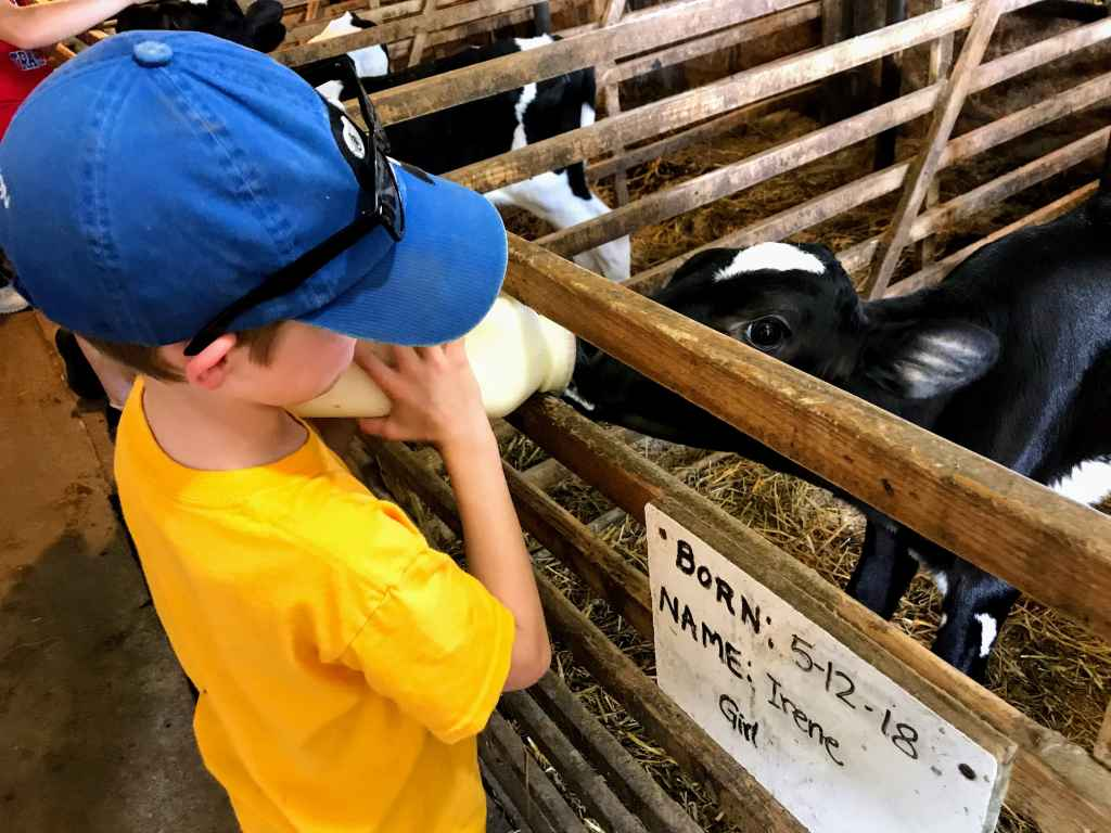 Shipshewana with Kids - Buggy Lane Tours Dairy Tour
