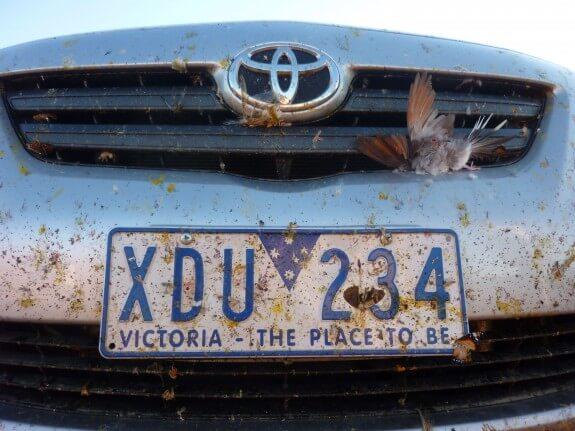 Résultat expédition red center australie road trip