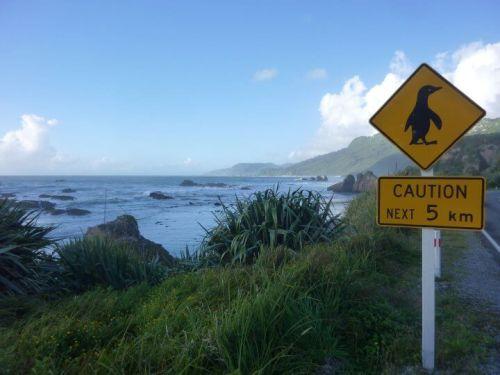 Pancakes rocks sur la route panneau pingouin nouvelle-zélande