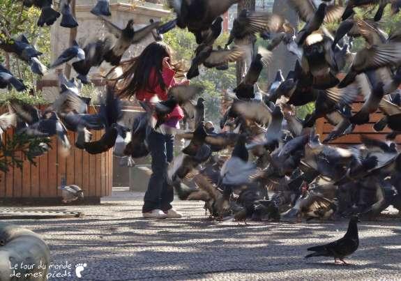 Pigeons santiago du chili plaza de armas