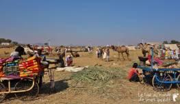 Pushkar (10)