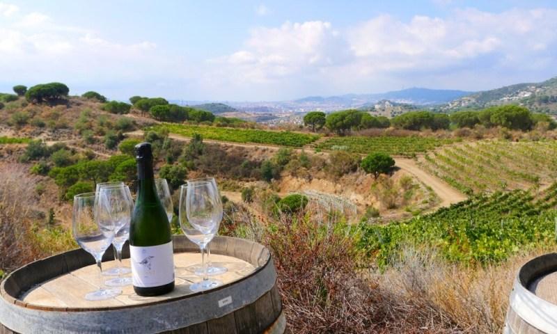 panorama vins barcelone Alta Alella
