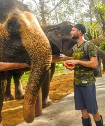 nourrir éléphants thaïlande