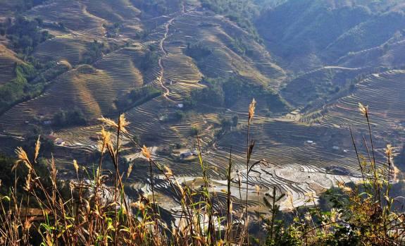 rizières Sapa et Lao Chai