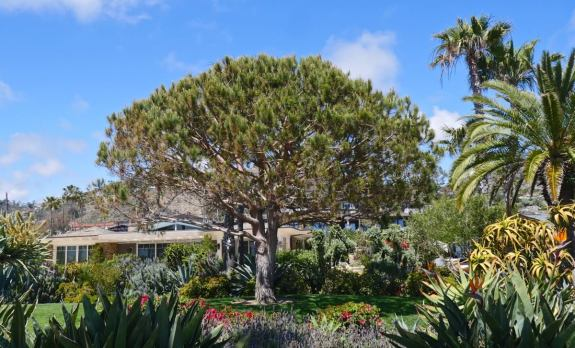 arbre treasure island park