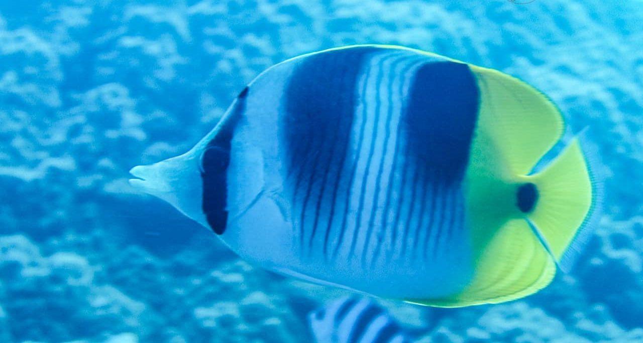 Plongée à Bora Bora