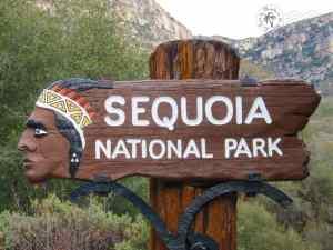 Sequoia NP - Etats-Unis