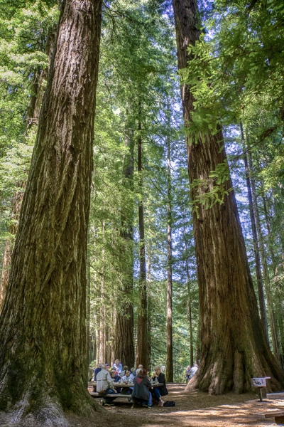 Redwoods Capture The Momentcapture The Moment