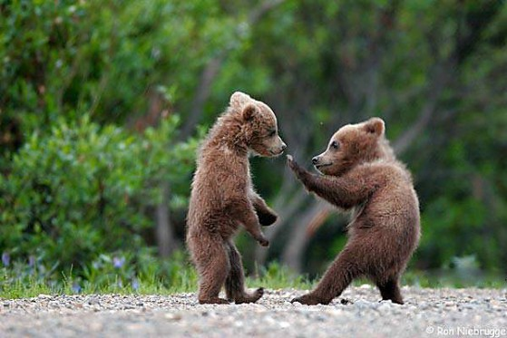 Tourists Come to Slovenia to Watch Bears