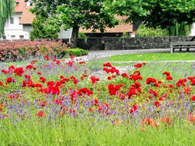 """The """"secret gardens"""" of Ribnica."""