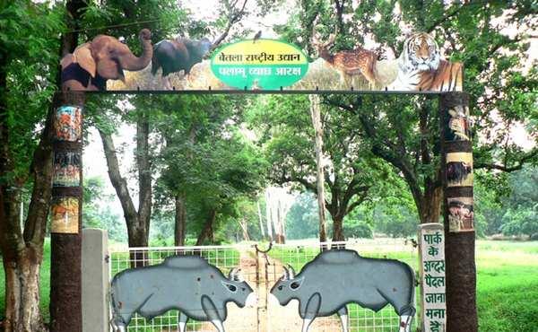 betla-national-park-jharkhand-india_1.jpg