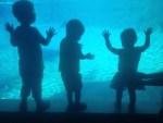 silent sunday aquarium